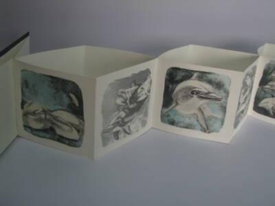 Nadando con delfines (A)