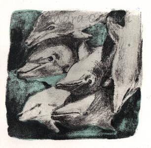 Comunidad Delfin